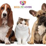 Bicol Pet Lovers Veterinary Clinic
